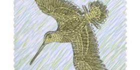 Kahlaajalintuja - Taivaanvuohi  postimerkki 2