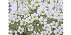 Ketokukkia - Papelorikko  postimerkki 1 luokka