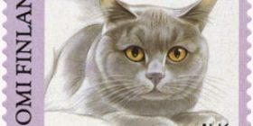 Kissoja - Englantilainen lyhytkarvakissa  postimerkki 1 luokka