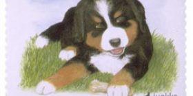 Koiranpentuja - Berninpaimenkoira  postimerkki 1 luokka