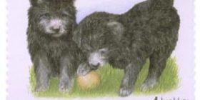 Koiranpentuja - Pumi  postimerkki 1 luokka