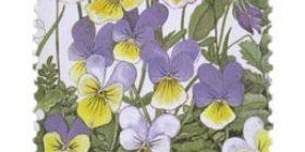 Ketokukkia - Keto-orvokki  postimerkki 1 luokka