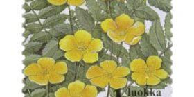Ketokukkia - Ketohanhikki  postimerkki 1 luokka