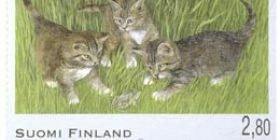 Kissoja - maatiaiskissan pentuja  postimerkki 2
