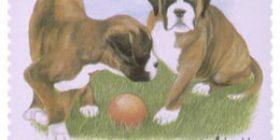 Koiranpentuja - Bokseri  postimerkki 1 luokka