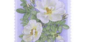 Kukka filatelialle  postimerkki 2