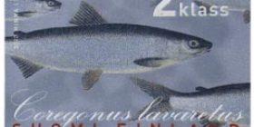 Maakuntakalat - Siika  postimerkki 2 luokka